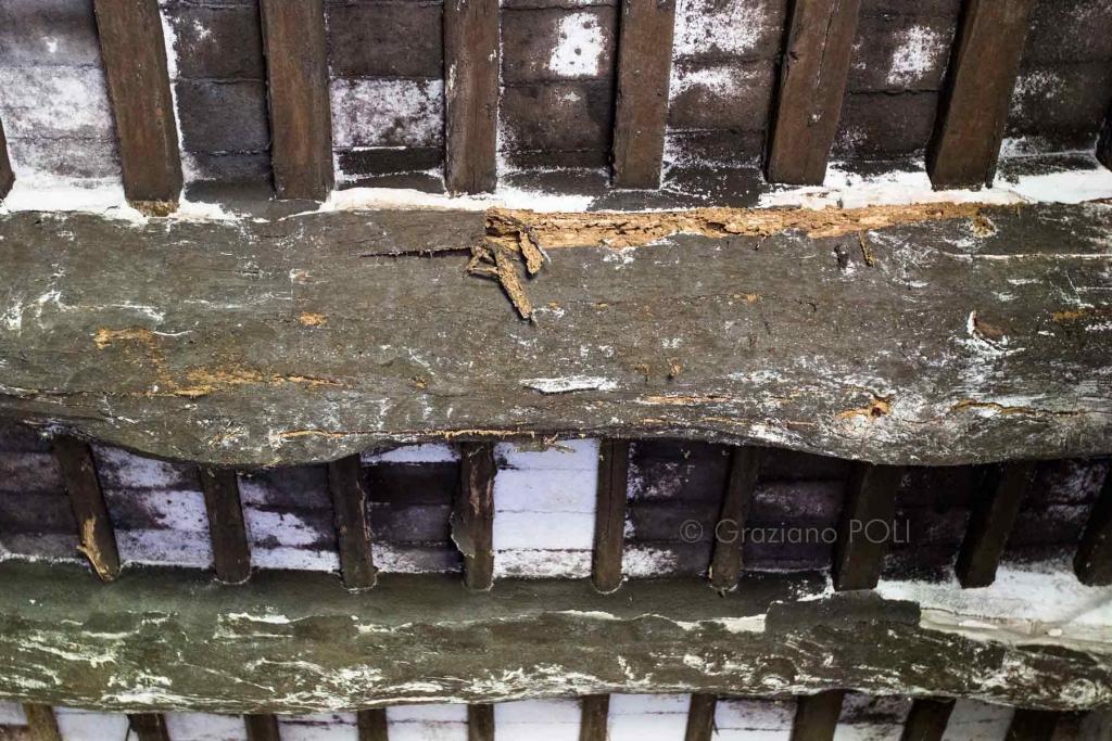 Funghi agenti di carie del legno - Travi