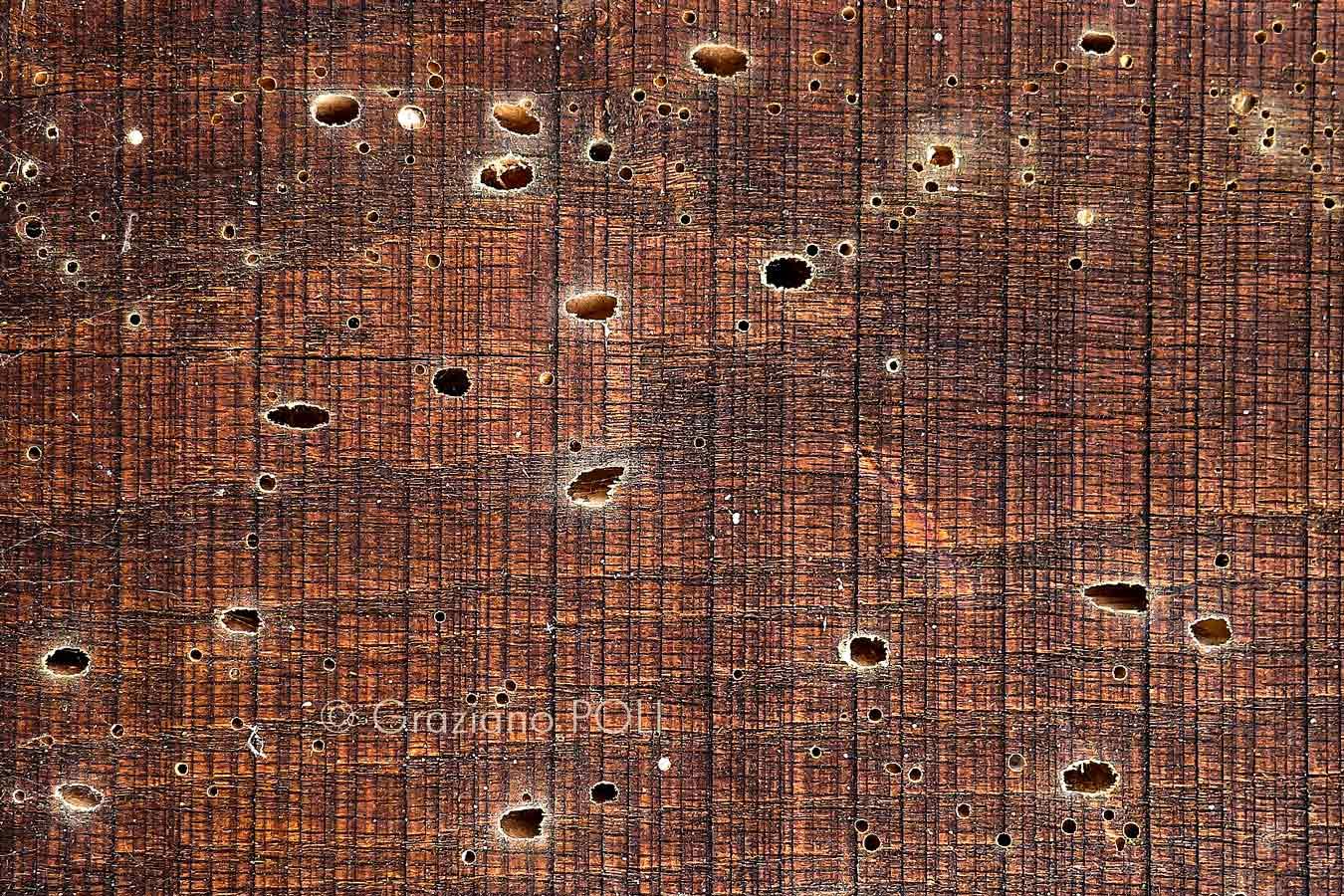 Tarli del legno? Quattro motivi per fare un trattamento antitarlo